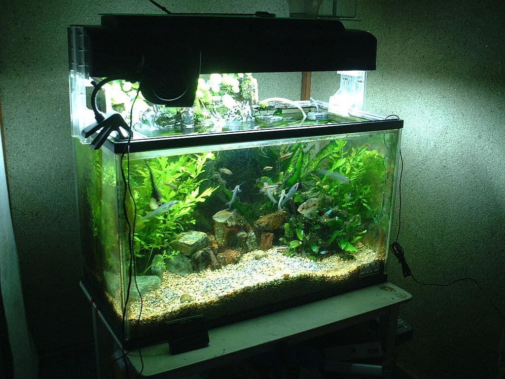 Freshwater fish acclimation - 16toki Public Domain