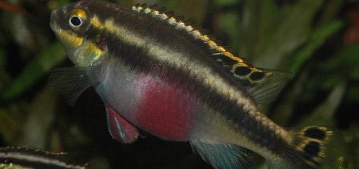 list of catfish profiles